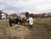 konji_u_sarajevu.jpg