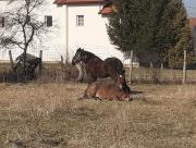 konji_u_sarajevu.jpg_1.jpg